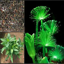 100Pcs Rare Emerald Fluorescent Flower Seeds, Night Light Emitting Plants New