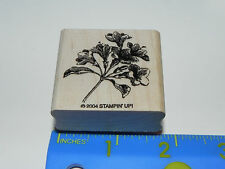 Stampin Up Single Stamp - Flowering Branch (Nature Floral Flower Life Like)