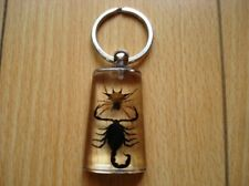 Real Spiny Spiner & Black Scorpion Clear Keychain