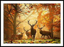 Deer Stag Herd in forest sunset FRAMED ART PRINT PICTURE