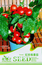 1 Pack 20 Tomato Seeds Lycopersicon Esculentum Red Pearl Tomatos Vegetable C017