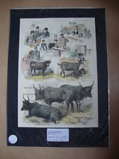 Genuine Hand Coloured Antique Print of The Dairy Exhibits at a Country Show