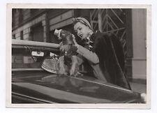 PHOTO ANCIENNE Curiosité Animal Chien Masque à gaz Funny Drôle Bizarre Vers 1950