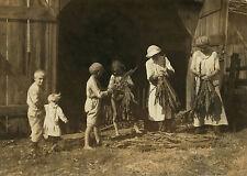 "1916 Old Photo, Tobacco Farming, Children, labor, Kentucky Farm, SIZE- 18""x13"""