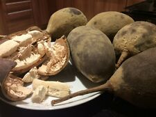 Fresh Baobab Fruit approx 10kg total not powder UK Seller Ships from London!