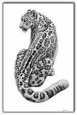 Snow leopard print picture wildlife sketch wall fine art animal pencil drawing