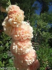 30 Hollyhock seeds - SALMON QUEEN - Double flowers, Hard to find color