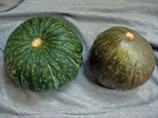 Japanese Kabocha Winter Squash   20+ Seeds Organically Grown