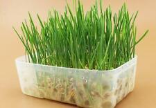 100% Natural Trixie Cat Kittens Pets Soft Grass Organic Treats Including Tray