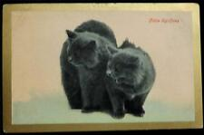 """OLD POSTCARD OF A CATS / KITTENS - """"LITTLE SPITFIRES"""""""