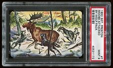 1950 Sgt. Preston Challenge of the Yukon #07 Moose Attack by Wolf Pack PSA 9 MT
