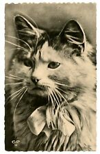 vintage cat postcard beautiful large longhaired cat w box head portrait