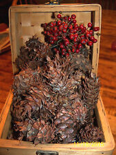 50 Coast Douglas Fir Cones for Crafts,wreaths or fillers!