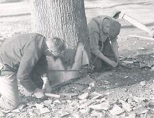 BUCHERONS c.1960 - Début du Sciage d'un Arbre - Div 5632