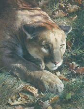 """Stalking - Cougar"" Carl Brenders Limited Edition Fine Art Giclee Canvas"