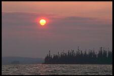 238003 Otter Sunset A4 Foto Impresión