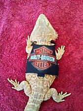 Lil' Bestie Bearded Dragon Harness and Leash HARLEY DAVIDSON