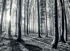 315x232cm Giant wall mural photo wallpaper Black and white forest - trees