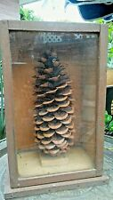 Antique Wooden Box/Crate A&P Glass Display Large Long Leaf Pine Cone
