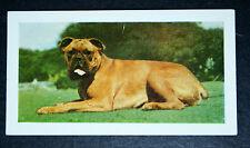 BOXER   Dog    Vintage Colour Photo Card  VGC