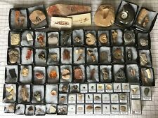 HUGE (80+ Piece) Fossil Collection - Dinosaur Tooth, Amber, Megalodon ...