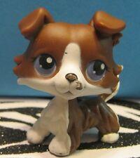 Littlest Pet Shop No # Brown & White Collie Puppy Dog w/ Purple Eyes Blemish