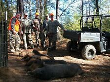 1 DAY ALABAMA WILD HOG HUNT WITH CABIN