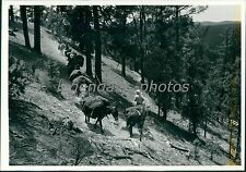 1974 Riders on Switchback in Gila Wilderness Original News Service Photo
