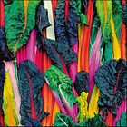 SILVERBEET 'Bright lights' 25 seeds RAINBOW unusual vegetable garden