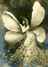 vintage art Fairy Fantasy Lady Glamour