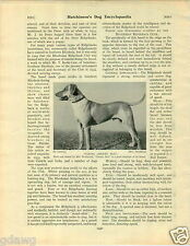 1930 Book Plate Dog Print Rhodesian Ridgeback Viking Cheery Boy Heightfinden