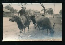 Thailand SIAM Water Buffaloes and Keeper c1920/30s? RP PPC
