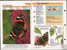Vulcain Papillon Vanessa atalanta  Red Admiral butterfly Insect FICHE FRANCE