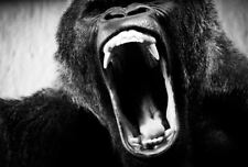 Framed Print - Massive Roaring Jaws of a Giant Gorilla (Picture Poster Ape Art)