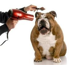 Mobile Dog Cat Pet Grooming BUSINESS PLAN + MARKETING PLAN = 2 PLANS!