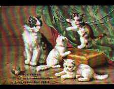 JEU de CHAT & CHATON / BELLE JARDINIERE à PARIS / illustré début 1900