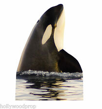 "KILLER WHALE ORCA ""LIFESIZE"" CARDBOARD STANDUP STANDEE CUTOUT FIGURE POSTER PROP"