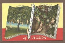 VINTAGE POSTCARD LINEN UNPOSTED TROPICAL TREES SAUSAGE & CANNAN BALL FLORIDA