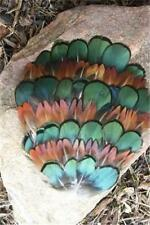 #230 GREEN AMHERST & GOLDEN PHEASANT FEATHERS-PAD