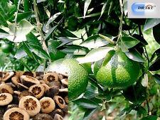 Zhi Shi (immaturi FRUIT OF THE arancio amaro), frutti immaturo 100g ERBE A SECCO