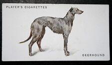 SCOTTISH DEERHOUND     Original Early 1930's Vintage Card # VGC