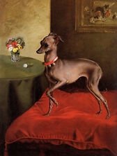 ITALIAN GREYHOUND CHARMING DOG GREETINGS NOTE CARD CUTE DOG STANDS ON CUSHION