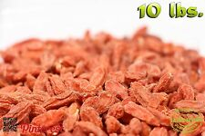 160oz of Bulk Superfruit Immunity Enhancer Goji Wolf Berries [10 lbs.]