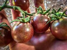 Tomato Black Cherry Purple Beautiful black cherries look like large, grape 25 +