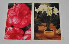 Vintage 2 Attached Postcards Michigan Bulb Co 1997 Begonia Amaryllis