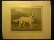 C. Burton Barber, English Setter, Color lith Cassell's Illustrated Dogs,1881