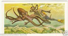 OCTOPUS COUSTEAU CALYPSO FREE DIVER DIVING PLONGÉE SOUS MARINE IMAGE UK CARD