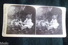 STA964 Scène de genre Fillettes chiots chien Photo 1900 STEREO stereoview