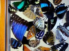 Cadre avec ailes de  papillons.  Frame with butterfly wings.