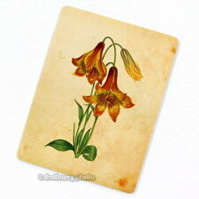 Deep Colored Canadian Lily Deco Magnet, Decorative Fridge Refrigerator Mini Gift